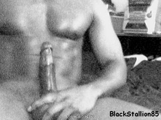Fresh_meat_blackstallion85_6